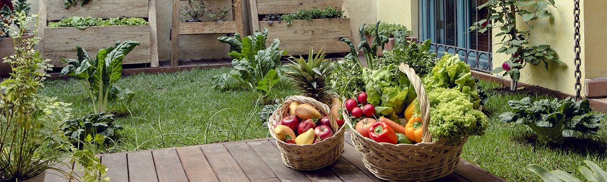 casa-lum-huertos-organicos-banner